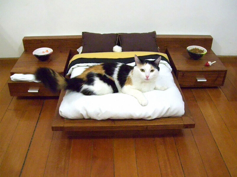 best cat bed