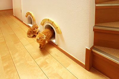Extra cat room hidden under the stairs.