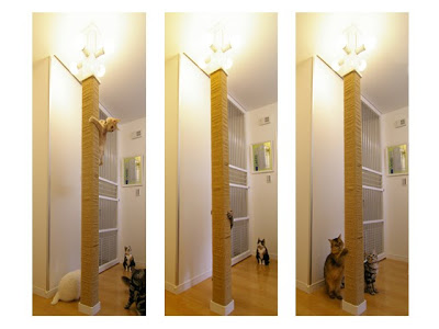 The biggest scratching post I have ever seen!!