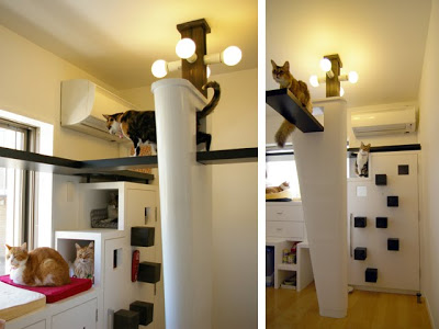 This is cat only room!